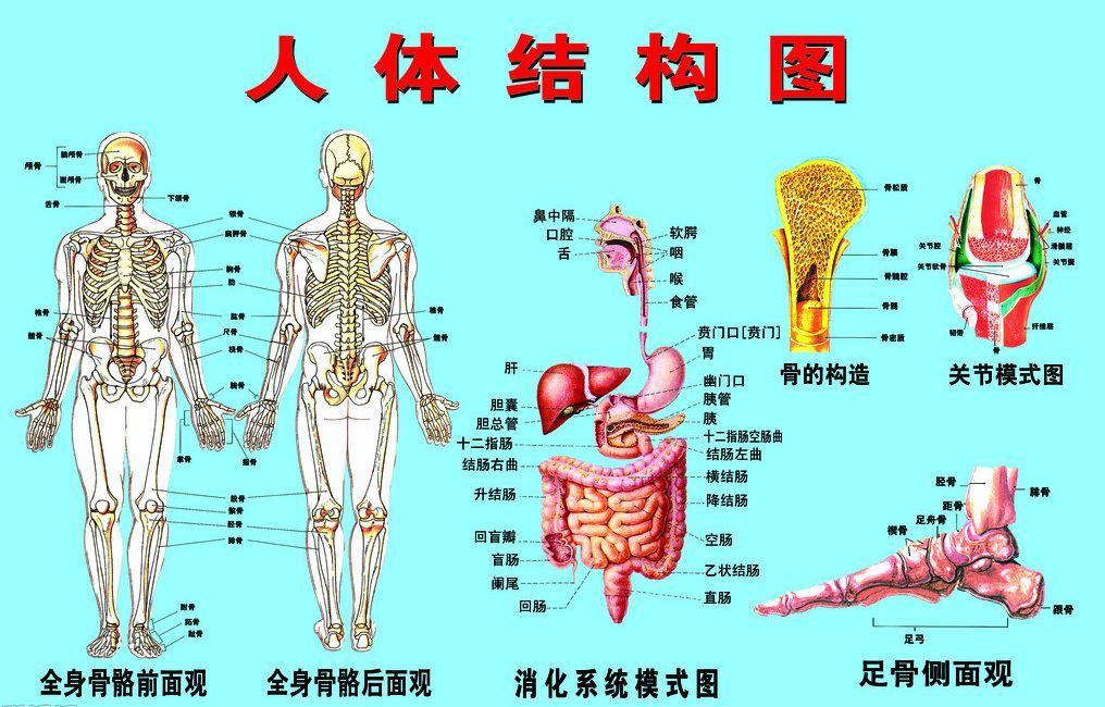 人体结构和功能_了解人体结构知识,掌握器官基本功能和保护常识